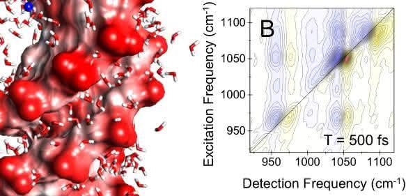 DNA-Doppelhelix - Wasser induziert elektrische Felder an der DNA-Oberfläche