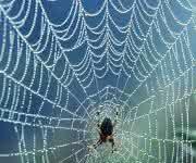 Spinnenseide: Neue Erkenntnisse über die Beschaffenheit gewonnen