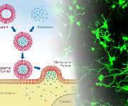 mRNA-Transfer