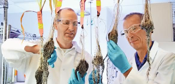 Bayer legt Angebot für Monsanto vor