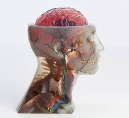 Vollfarb-3D-Druck mit mehreren Materialien