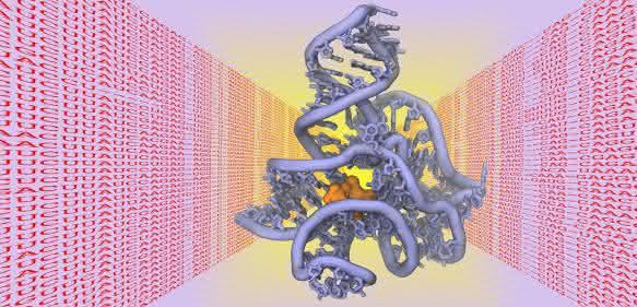 3D-Struktur von Biomolekül