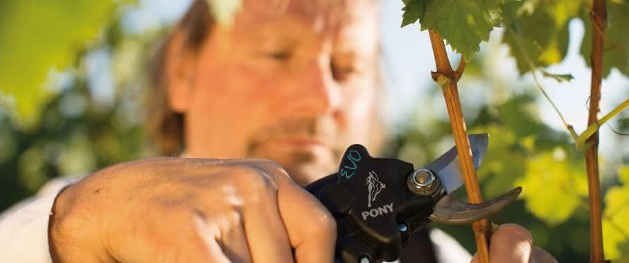 Elektrische Schere Pony von Campagnola