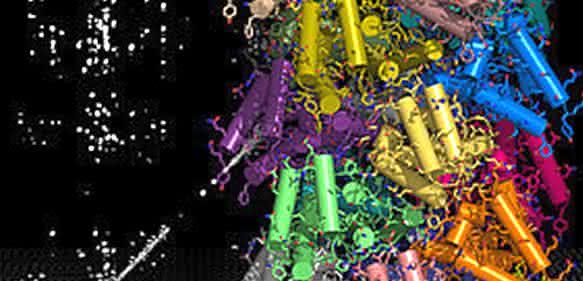 NMR-spektroskopische Daten und ein Rechenalgorithmus führen zur Darstellung der hochauflösenden Struktur von Proteinen (© Benjamin Bardiaux).