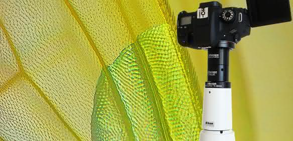 Der modulartige Aufbau der LM Mikroskopadapter ermöglicht eine exakte Bildfeldanpassung für Kameras unter Berücksichtigung der Sensorgröße.