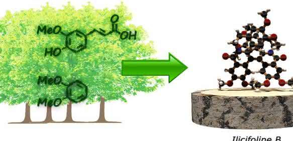 Moleküle aus Holz