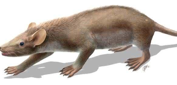 Lebendrekonstruktion des kreidezeitlichen Ursäugers Spinolestes xenarthrosus. (Zeichnung: Oscar Sanisidro. Mit Genehmigung der Nature Publishing Group)