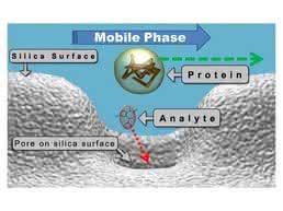 Bild 7: Zielanalyten dringen in die Poren des Turboflow-Partikels ein, während die großen Moleküle der Matrix weitergespült werden. © Fa. Thermo Scientific