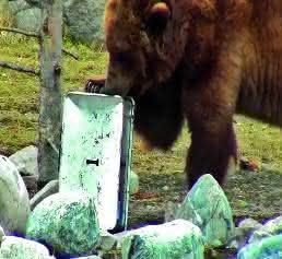 Zarges-Box besteht Bärentest