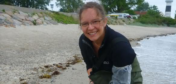 Angelika Graiff beim Sammeln des Blasentangs Fucus vesiculosus für Untersuchungen zur Auswirkung  von Ozeanversauerung und Erwärmung auf den Blasentang und seine assoziierte Lebensgemeinschaft in der Benthokosmos-Anlage am GEOMAR in Kiel. (Foto: privat)