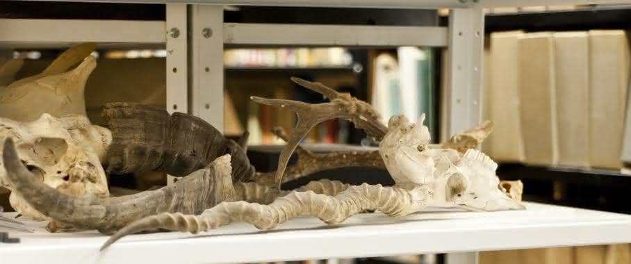 Tierpräparate: Die naturhistorischen Museen der Erde beherbergen Millionen von Tierpräparaten