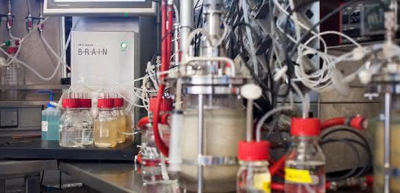 Produktion von Enzymen