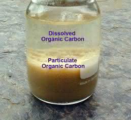 organischer Kohlenstoff