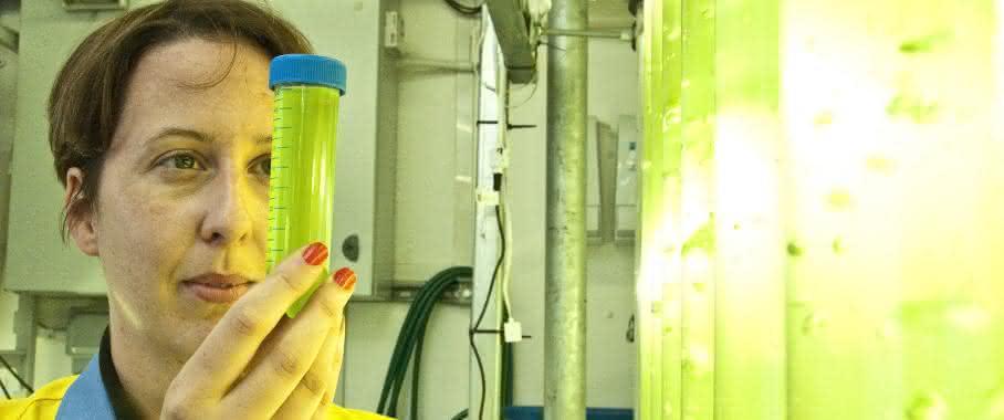 Wie nutzen Algen CO2
