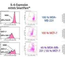 Detektion von mRNA