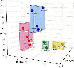 Clusteranalyse