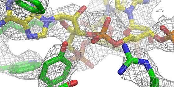 Mitoribosoms von Säugetierzellen aufgeklärt: Wirkung von Antibiotika verbessern