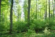 Forschungsprogramm Bioökonomie: Nachwachsende Rohstoffe nachhaltig nutzen