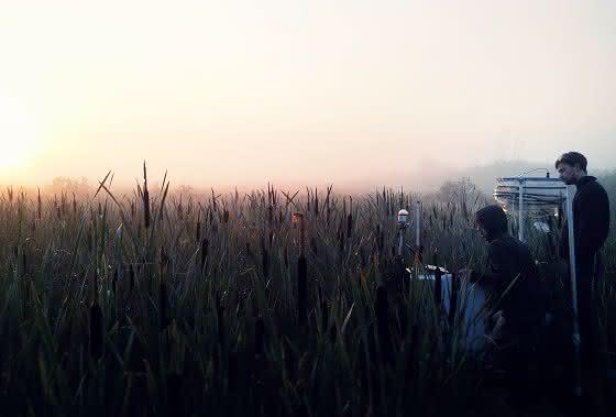 Mecklenburg-Vorpommerns Moore sind Alleskönner: Nachwachsende Rohstoffe und Klimaschutz