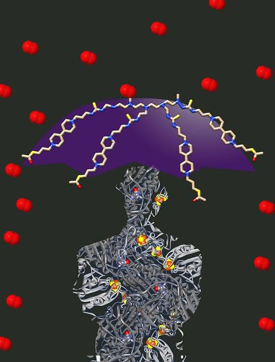 Ein Schutzschirm gegen Sauerstoff: Biokatalysatoren als Basis für Brennstoffzellen