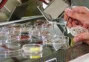 Neue Weltraumbewohner: Auch Algen auf der ISS