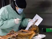 """Ötzis """"nichtmenschliche"""" DNA analysiert: Forscher stoßen in Ötziprobe auf Krankheitserreger"""