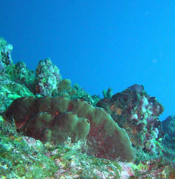 Naturstoffe aus dem Meer: Neu entdeckte Bakterien als potenzielle Arzneiquelle