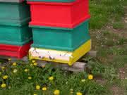 Gentest auf Feuerbrand-DNA: Von Bienen und Blüten