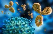 Zuverlässige Charakterisierung eines Antikörpers über einen weiten Konzentrationsbereich: Von Nano- bis Mikrogramm