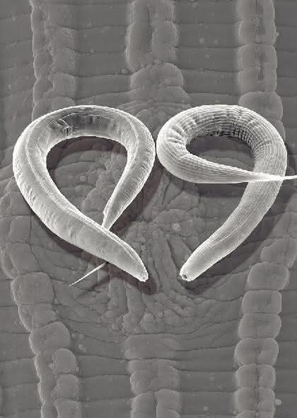 """Fachbeitrag: """"Mycoplasma  laboratorium"""""""