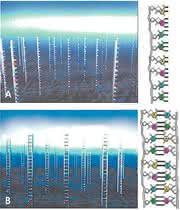 Fachbeitrag: Genetischer Fingerabdruck für Medikamente