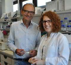 Professor Johannes Herrmann und seine Doktorandin Katja Hansen erforschen den Transport von Proteinen in die Mitochondrien.
