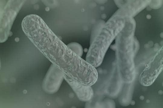 Mikrobielle Zellfabriken in Form von Stäbchenbakterien