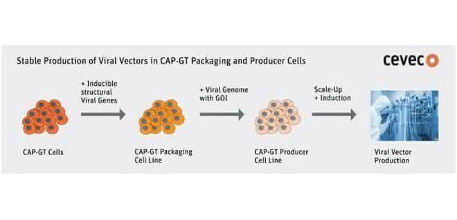 Stabiler Produktionsprozess für virale Vektoren mit Hilfe der CAP-GT-Zellen.