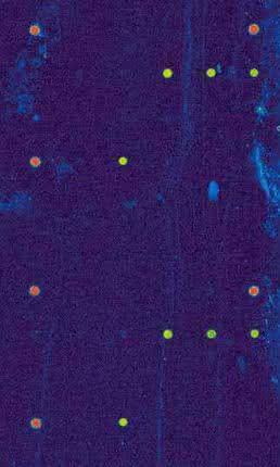 Parallele Detektion von Pathogenen in einem Mikrofluidiksystem