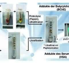 Probenvorbereitung von humanem Serum oder Plasma