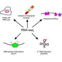 Bild 1: Anwendungen der RNA-Seq-Technologie in der Grundlagen- und klinischen Forschung.