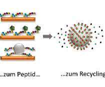Elektronik-Schrott recyceln: Mit Peptiden Seltene Erden gewinnen