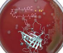 Collage aus Agarplatte mit chemischer Formel