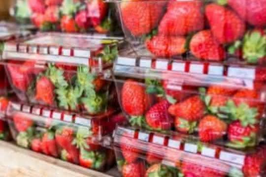 Lebensmittelecht?: Kunststoffe als Lebensmittelkontaktmaterialien