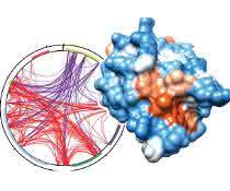 UHRF1 könnte sich als Zielstruktur für medikamentöse Therapien eignen, wie Wissenschaftler aus München vermuten.
