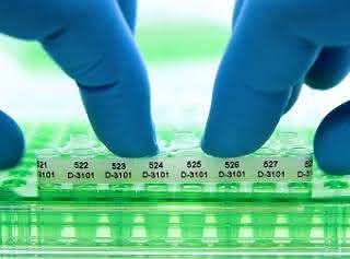 Acht PCR-Tubes mit perforiertem Etikettenstreifen