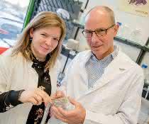 Jessica Borgmann und Professor Franz Narberhaus züchteten das Bodenbakterium im Labor – in Pflanzentumoren auf Kartoffelscheiben.