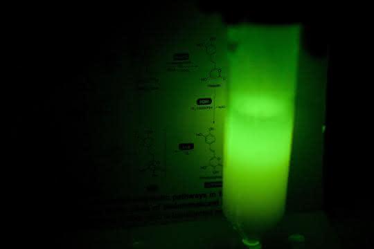 Künstlich glühende Hefezellen in einem Reagenzglas.