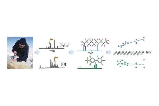 Hochleistungsanalytik: Hunderte neue halogenierte Substanzen in Eisbärenserum entdeckt