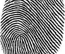 Datenbank für Polymeranalyse: Das Chromatogramm als Fingerabdruck nutzen