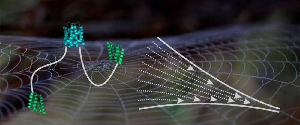 Schematische Abbildung eines Spidroins