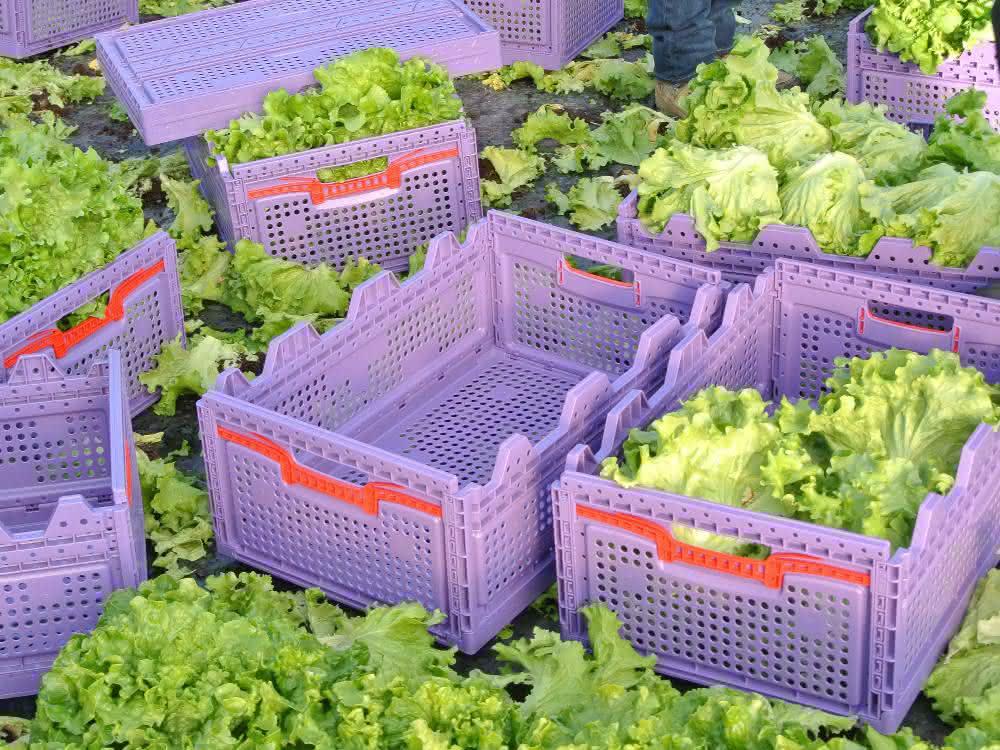 Gemüsebehälter mit Salat