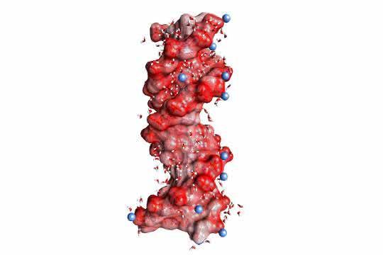 DNA-Doppelhelix in einer Wasserhülle (gewinkelte kleine Moleküle, nicht maßstäblich). Die kugelförmigen roten Strukturen auf der Helixoberfläche stellen die Sauerstoffatome der negativ geladenen Gruppen dar, die blauen Kugeln positiv geladene Ionen in der Umgebung.