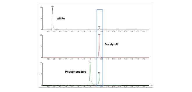 Bild 3: Basislinien-getrennte Peaks der in QuPPe beschriebenen kritischen Paarung AMPA, Fosetyl-Al und Phosphonsäure, so dass falsch-positive Identifizierung oder Überbefunde ausgeschlossen sind. Im blauen Kasten sind die Interferenzen von Fosetyl-Al in den MRM-Übergängen von AMPA und Phosphonsäure markiert.